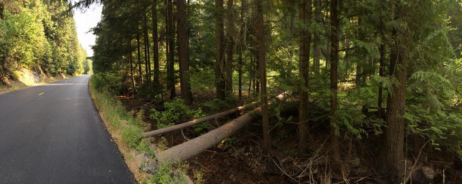 Climbing Mt. Spokane Park Drive by bike - roadway and log bridge across creek