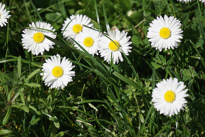 weedy grass.jpg