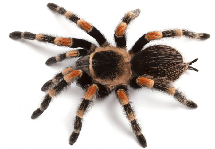 Image result for spider