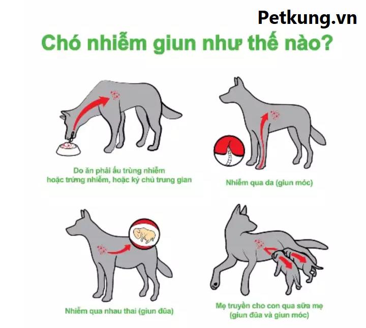 hiểu biết về bệnh giun chó mèo