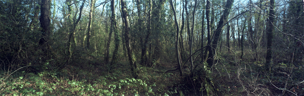 ARGRB1713_Untitled_2015_chromogenic print_84 x 247cm (large panoramic  in show).jpg