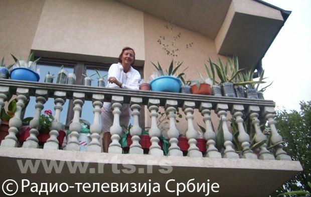 Kaktusi u odbačenoj ambalaži, foto: Slavica Jovanović