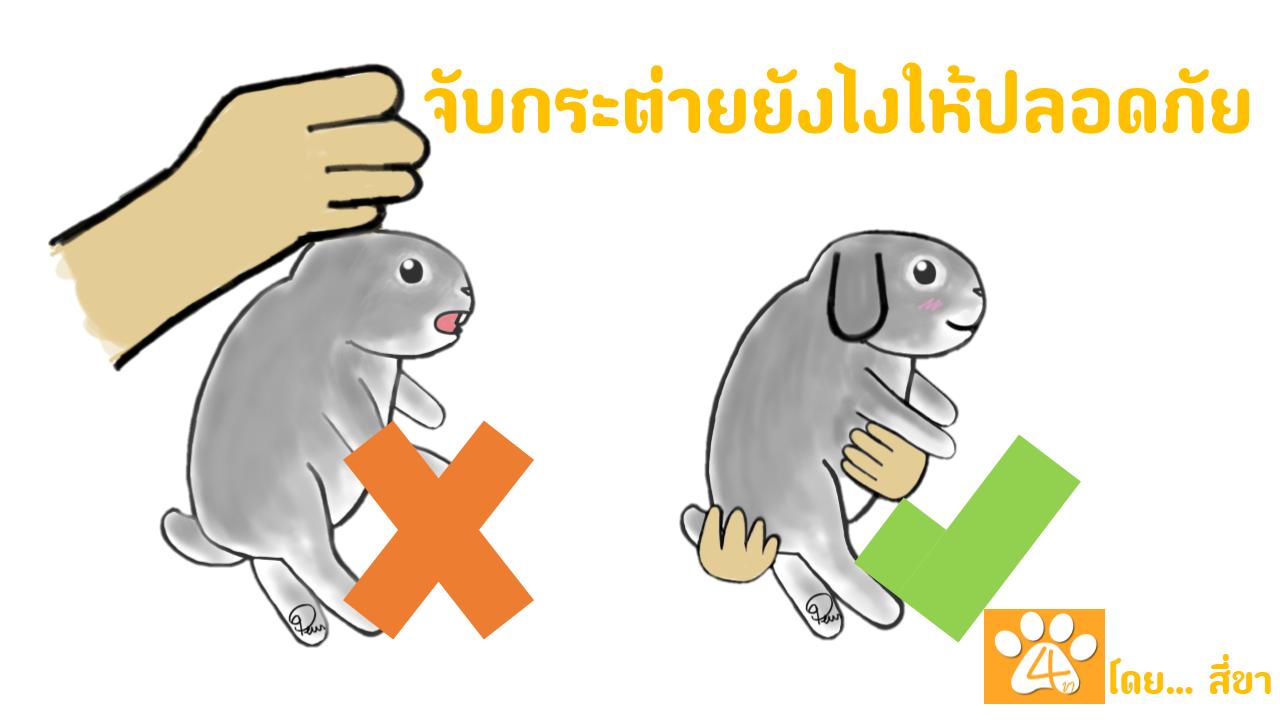 ผลการค้นหารูปภาพสำหรับ วิธีการอุ้มกระต่าย