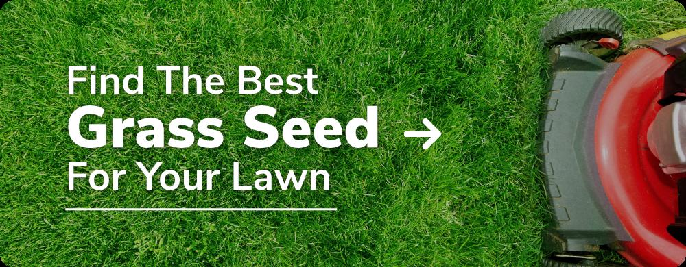 find curtis grass seed