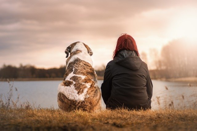 Having Trouble Training Your Dog? Here Are A Few Solutions