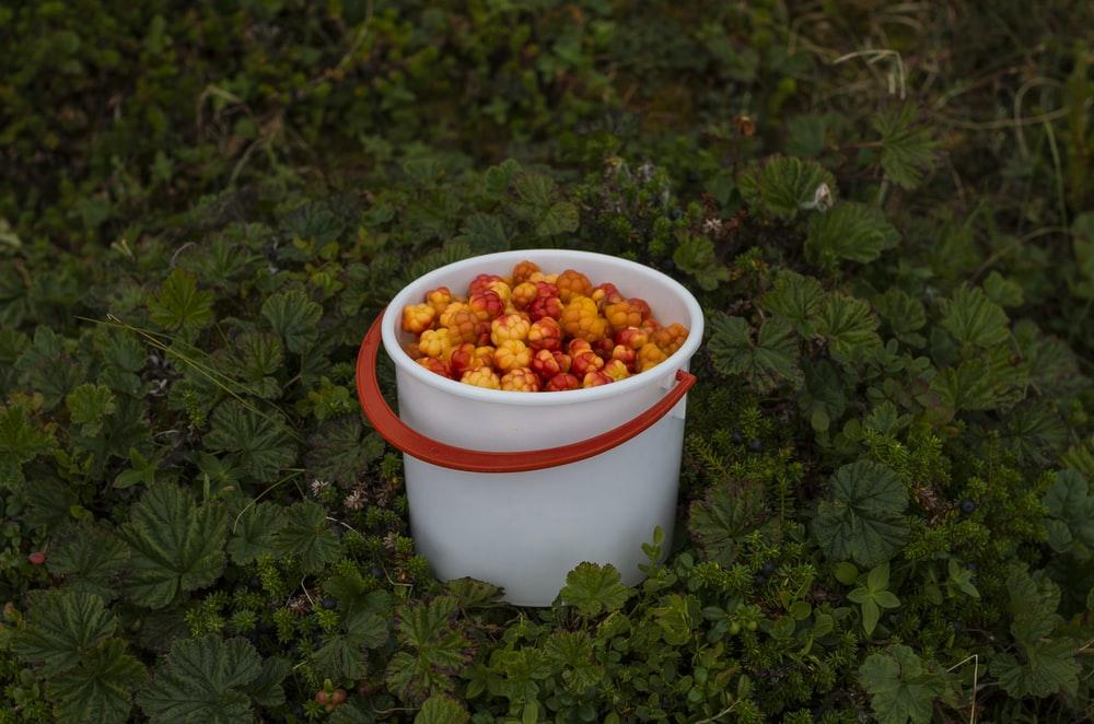 filled white and red plastic bucket on grass covered ground