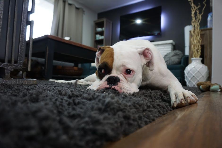 a dog lying on a rug