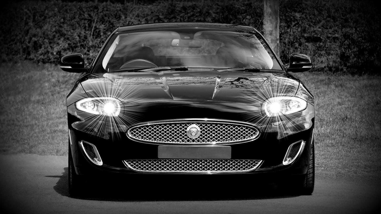 jaguar-1366978_1920.jpg