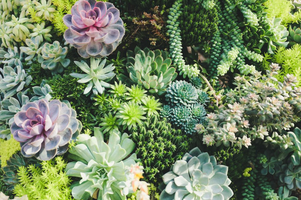 Garden of Beautiful Succulents