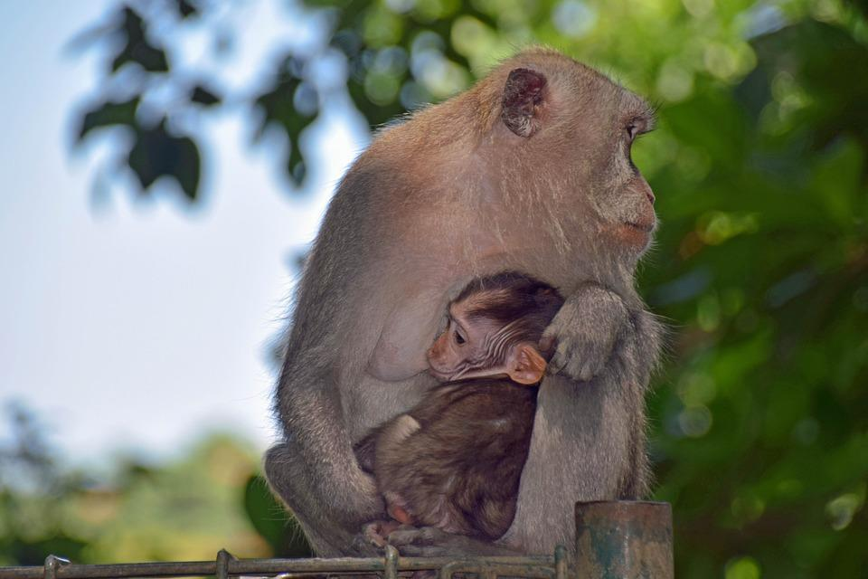 Bali, Indonesia, Travel, Ubud, Monkey Forest, Monkey