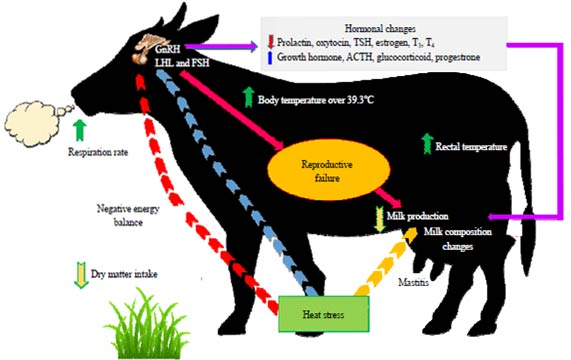 Hormones affected by the effect of heat stress on buffaloes and effect on the negative energy balance.