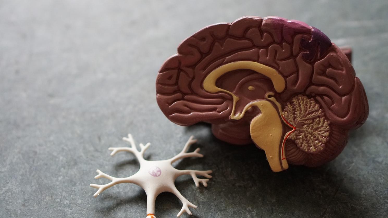 關於腦性麻痺的知識