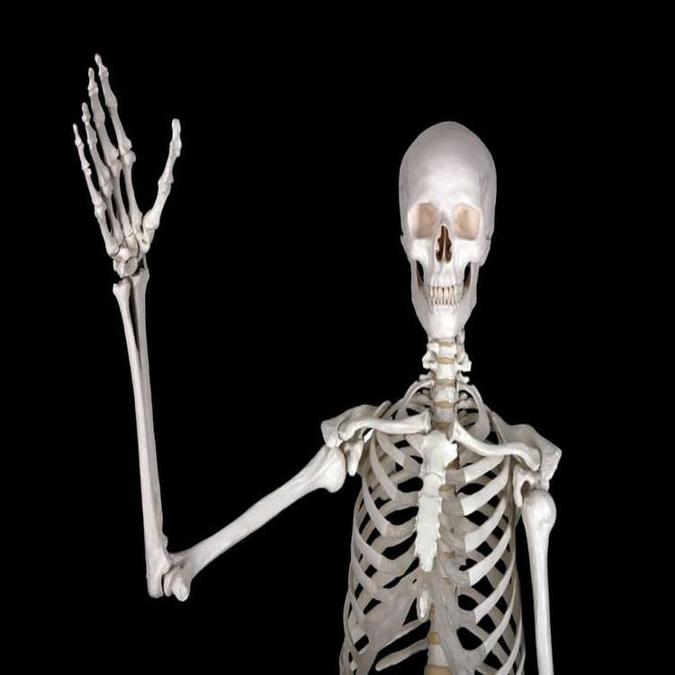 kesihatan tulang