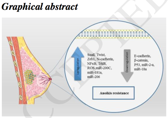 Graphical Abstract: anolkis resistance; breast cancer-related chemsitry