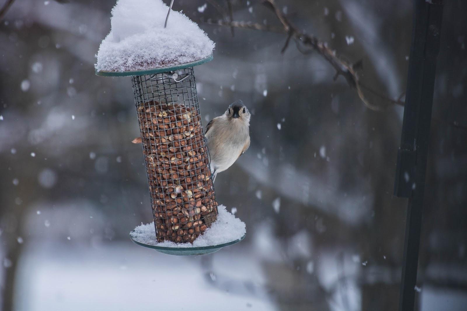 Bird watching from a feeder.