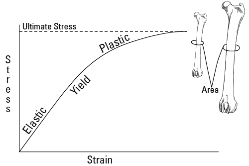 Idealized stress-strain curves for simple normalized samples harvested from femora from a Rottweiler and a Chihuahua tested under torsion reveal biomechanical properties of the bones' material (independent of geometry)