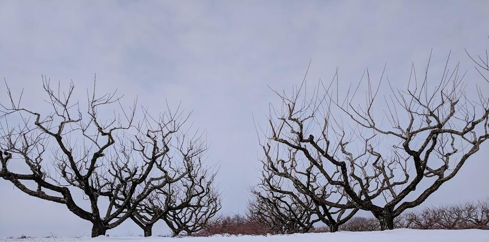 Pruning the Orchard:  Part Two of a Three Part Series
