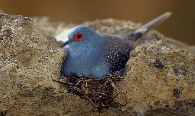 Nest sites should meet species-specific needs