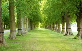 Image result for tree backgrounds