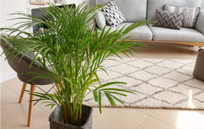 areca palm plant to help reduce static