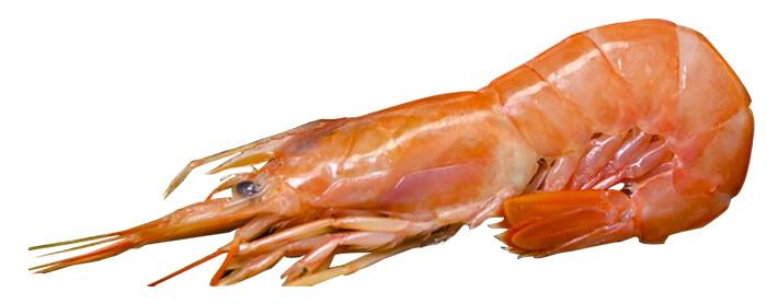 天使紅蝦有著甜度很高綿密的肉質以及豐富的蝦膏,此外最讓人印象深刻的就是天然柑紅色的外表。