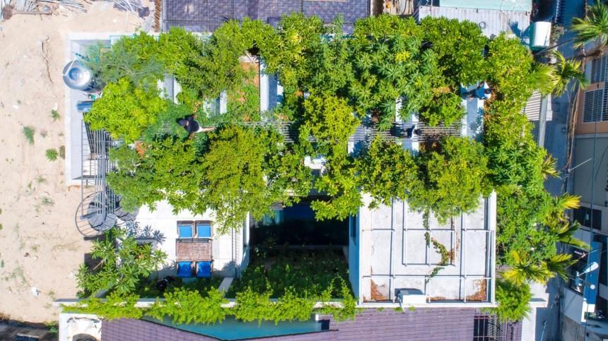 Trồng cây xanh giúp chống nóng và tạo không khí trong lành