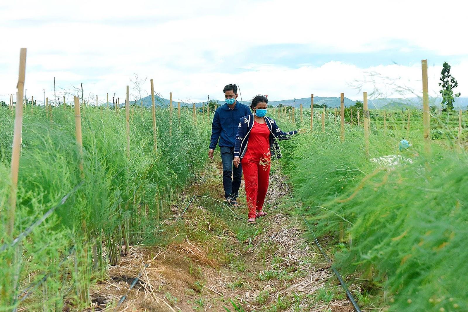 1.Dự án IDE được triển khai tại thị trấn Đak Pơ và xã Tân An (huyện Đak Pơ) từ tháng 10-2020 với 20 hộ tham gia, trong đó có 10 hộ nghèo.