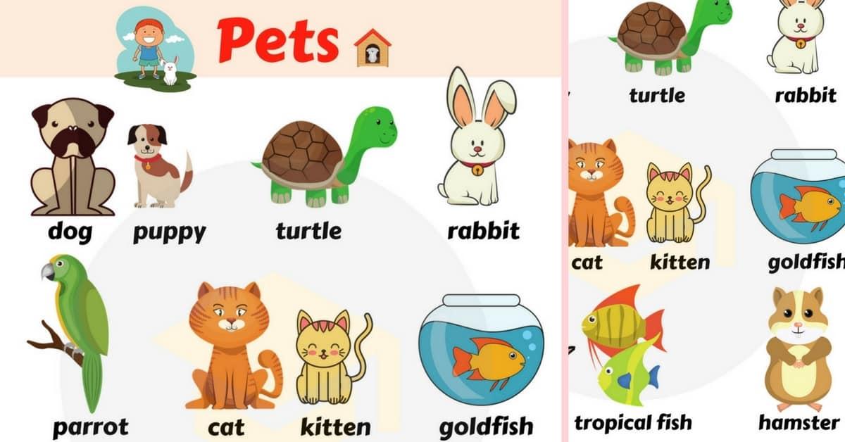 Types Of Domesticated Animals #ECDHUB