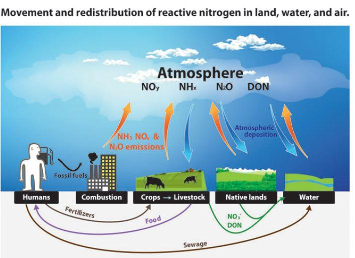 Image result for Nitrogen pollution has a significant impact on the environment: