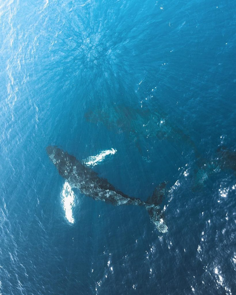 Whale Watching Boat Ride - best things to do in maui hawaii