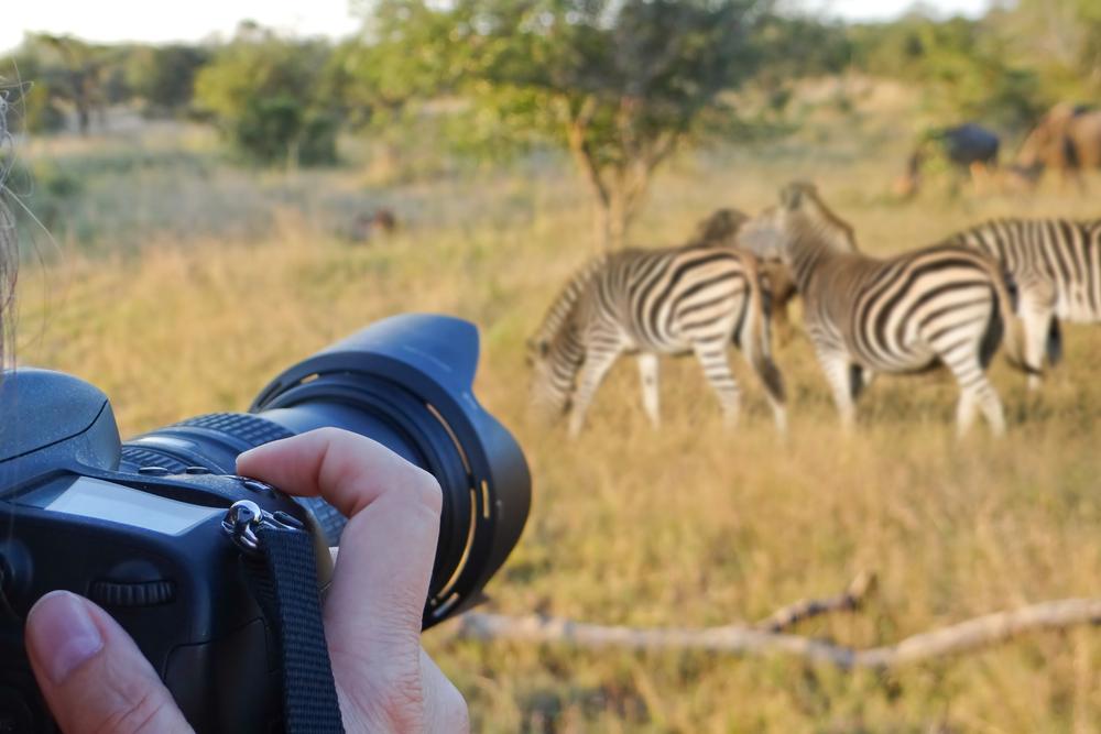 safari-camera.jpg