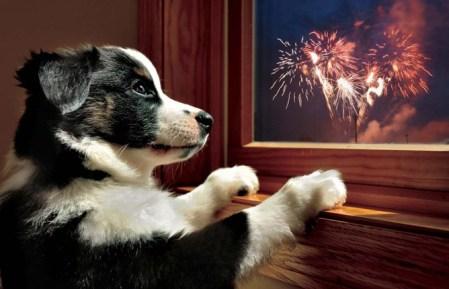 dog firework anxiety