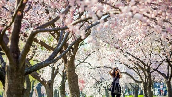 Arbor Day-image