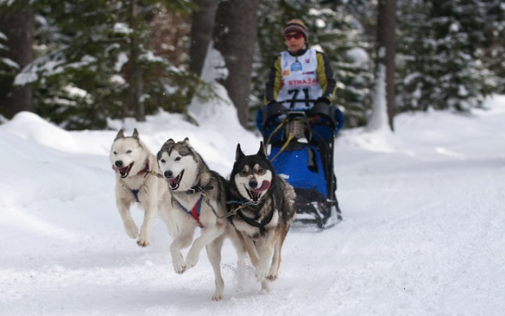The Complete Guide to Dog Mushing
