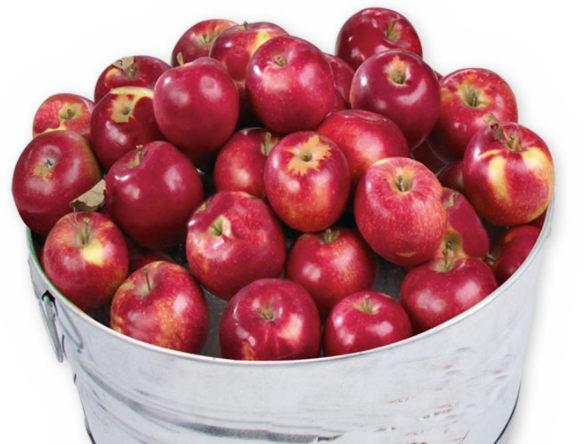 Tub of red apples.jpg