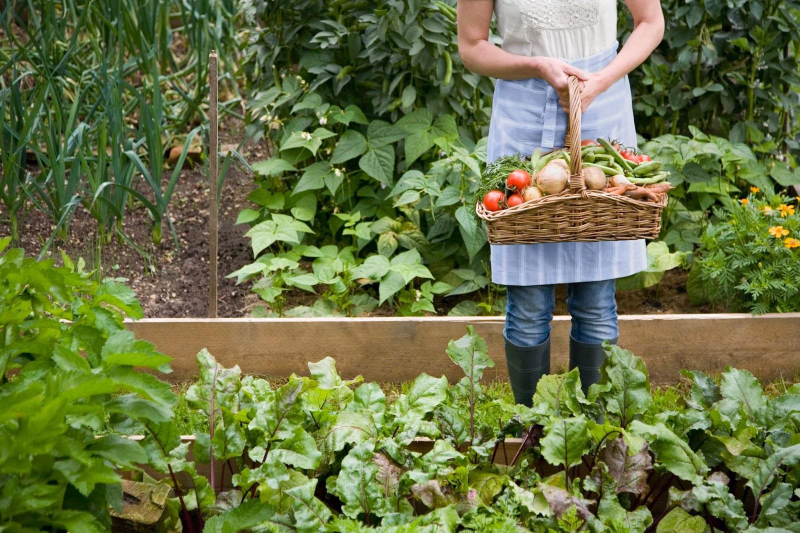 Panen buah dan sayur
