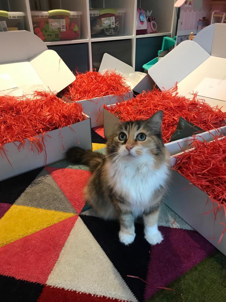 Chaser Christmas Helper