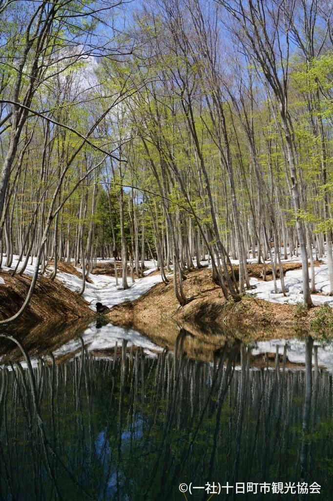 春季美人林