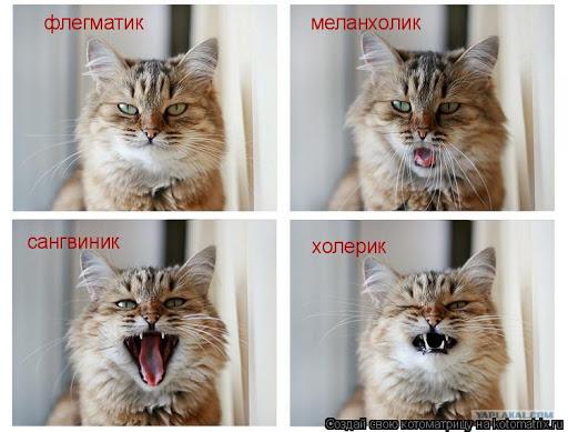 Темпераменты кошек
