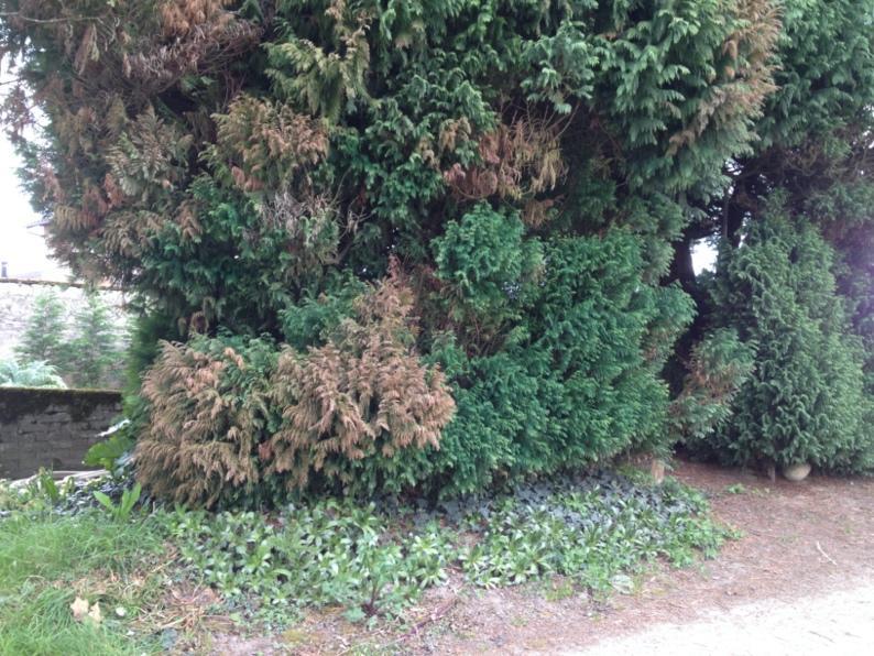 Une image contenant extérieur, plante, herbe, arbre  Description générée automatiquement