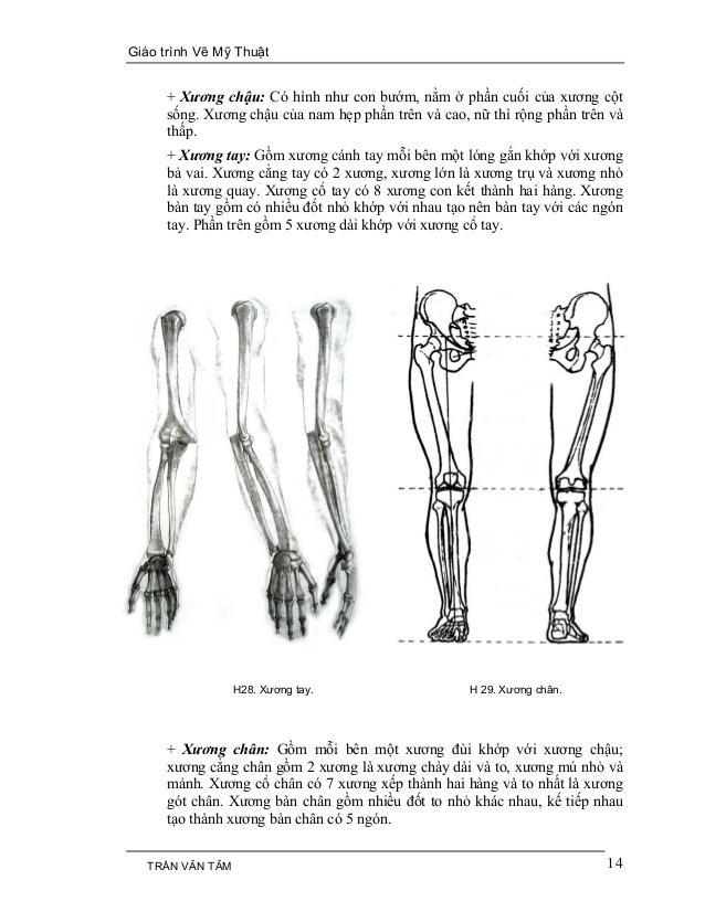 C:UsersG40-70Desktopmythuatarc.commythuatarcgiả phau cơcấu trúc cơ thểmy-thuat-1-14-638.jpg
