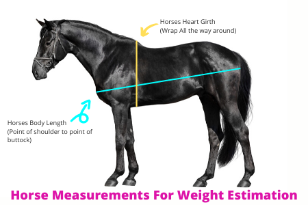 Horse Measurements For Weight Estimation