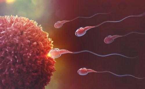 https://eresmama.com/wp-content/uploads/2019/05/fecundacion-espermatozoides-ovulo-500x308.jpg
