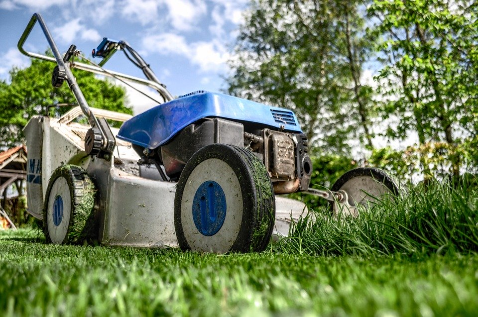 Top Tips for Lawn and Garden Care in Summer