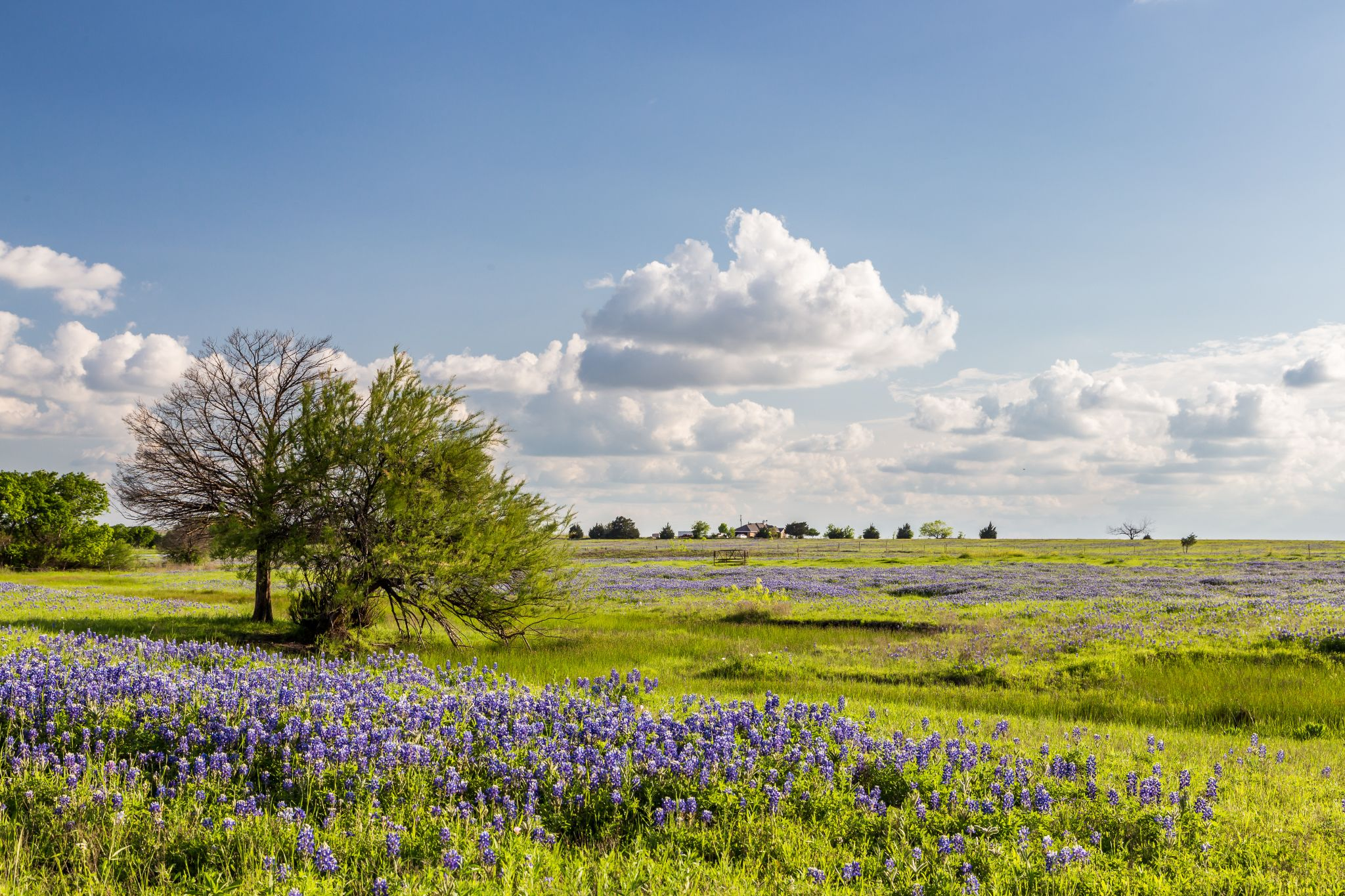 COTW explains what to look for when buying land in Texas