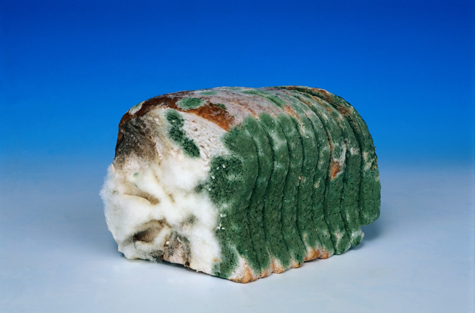mouldy-bread-fd002575.jpg