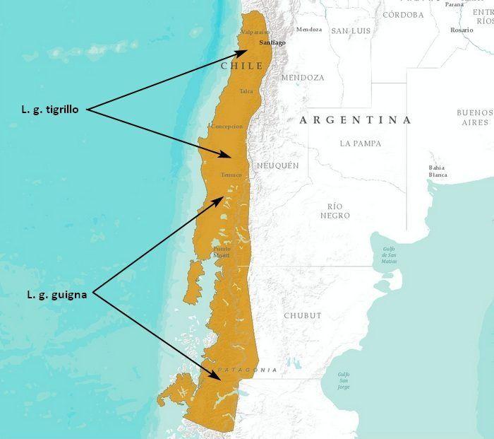 Ареал обитания дикой чилийской кошки