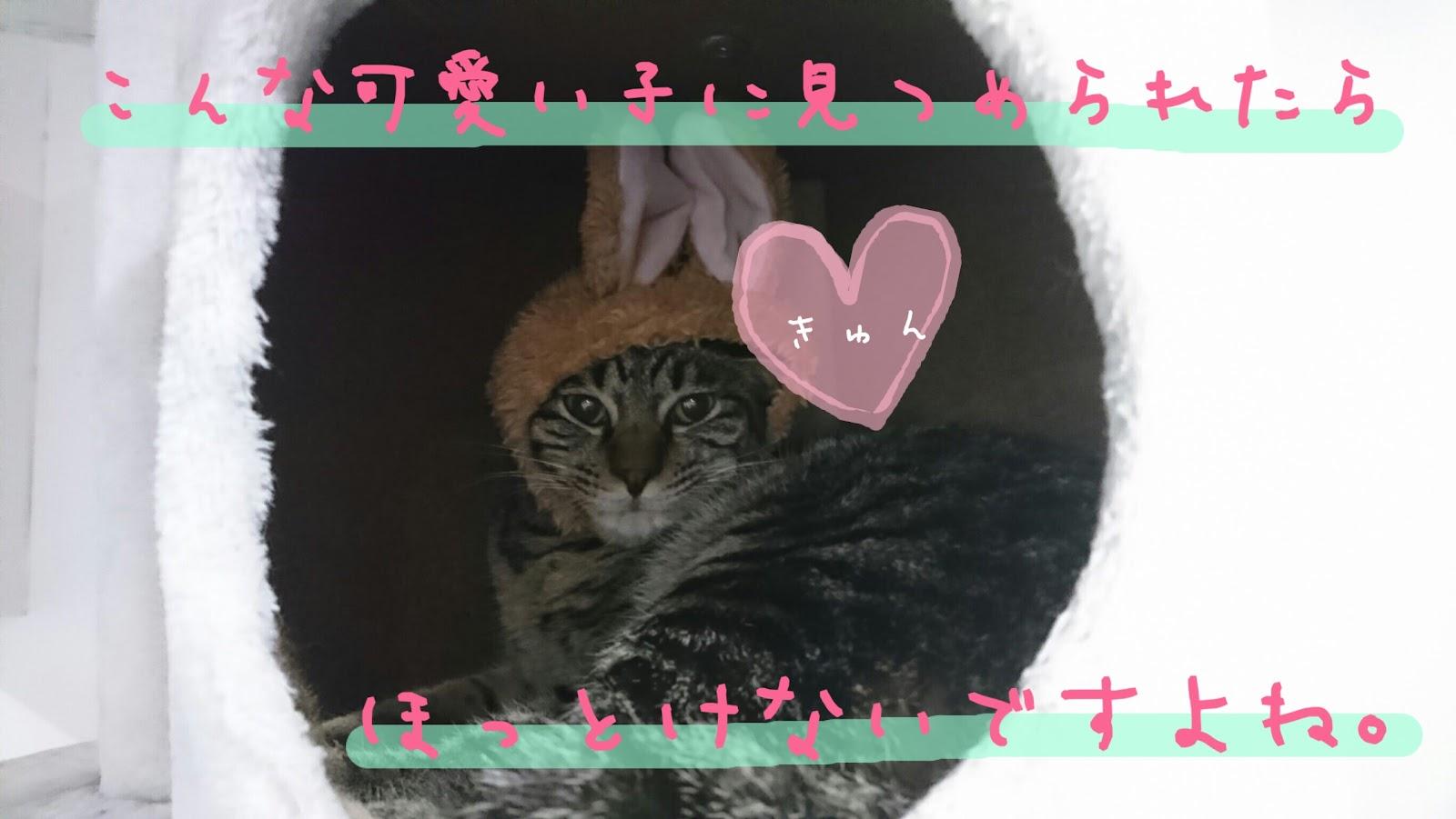 野良猫の保護でブログ SNSが炎上!猫を助けたいと善意で起こした行動に批判殺到