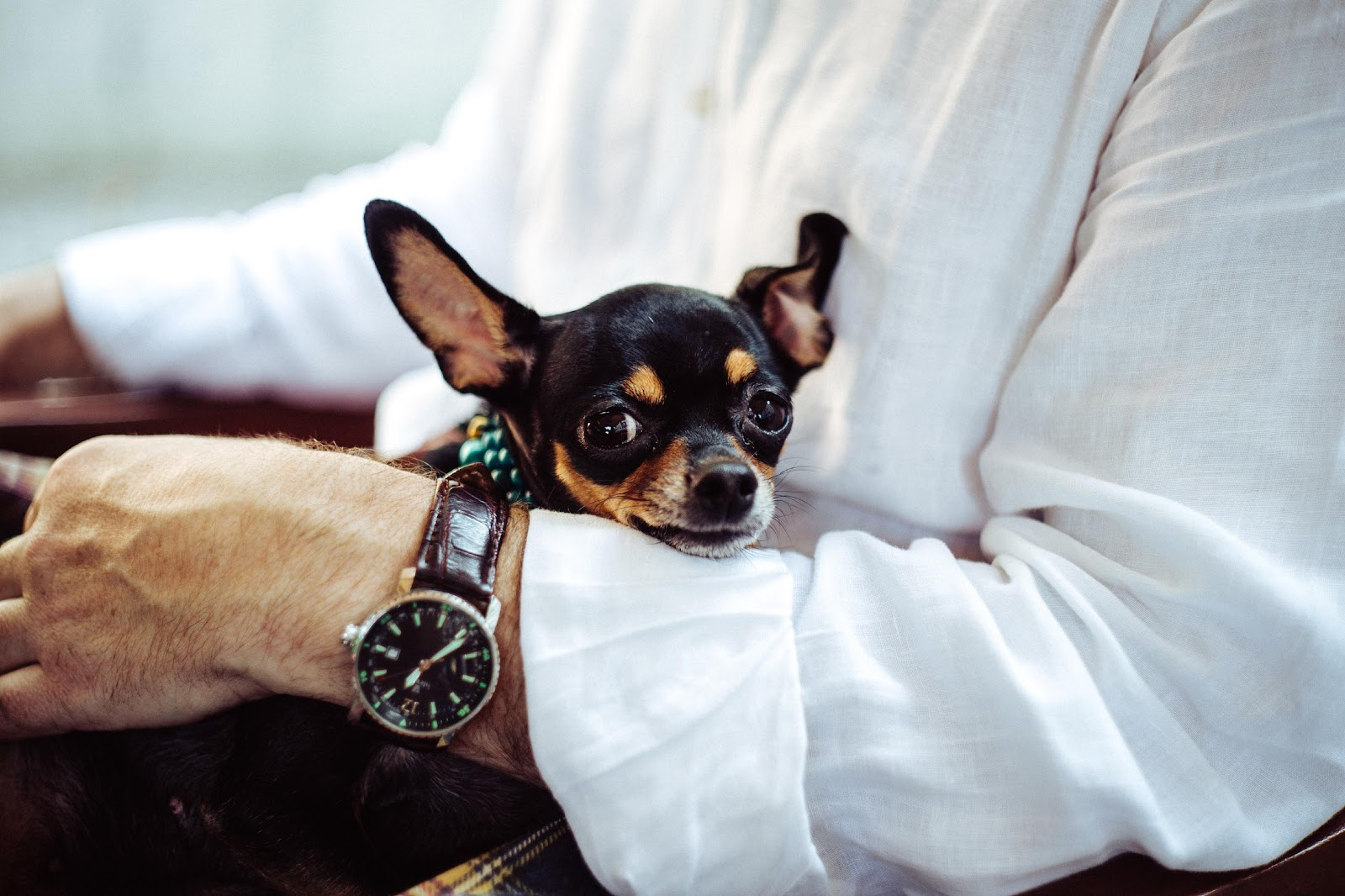 Traveling With Pet? Here Are 6 Tips That Can Help You At Best