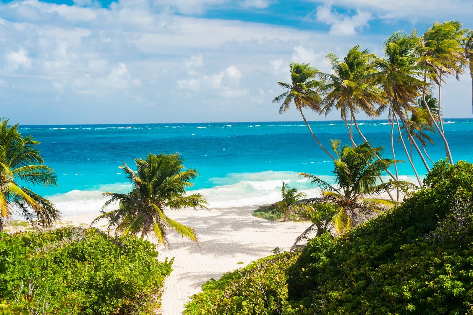 Barbados Travel Guide & Useful Advice, Purple Parking